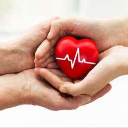 Herz in Händen Organspende