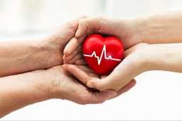 Organspende - Herz in Händen